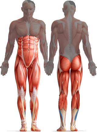 core muscles | Rock My Run Blog